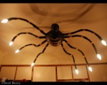 <h5>Spider Lamp</h5>
