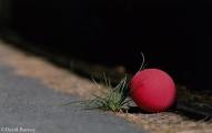<h5>Red Ballon</h5>